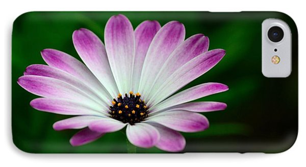 Violet And White Flower Petals With Yellow Stamens Blossoms  IPhone Case by Imran Ahmed