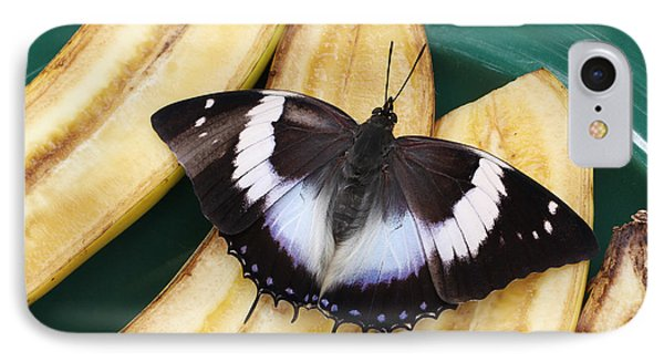 Violet-spotted Charaxes Butterfly IPhone Case