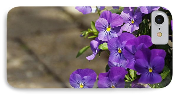 Violets IPhone Case by Denise Pohl