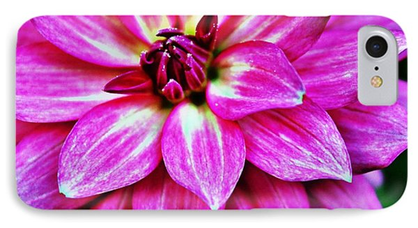 Virbrant Pink Dahlia IPhone Case by Judy Palkimas