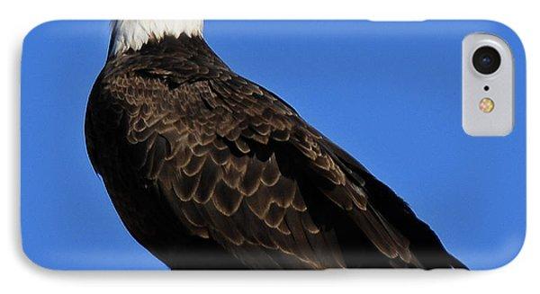 Virginia Bald Eagle Phone Case by Lara Ellis