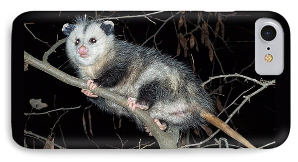 Virginia Opossum IPhone Case