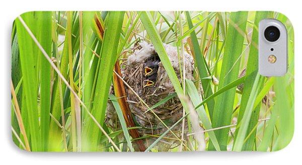 Wa, Juanita Bay Wetland, Marsh Wren IPhone Case by Jamie and Judy Wild