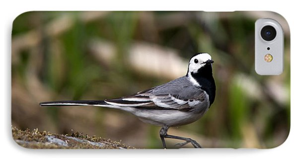 Wagtail's Step IPhone Case by Torbjorn Swenelius