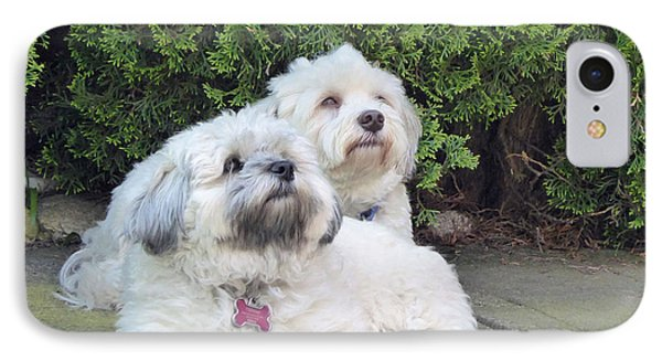 IPhone Case featuring the photograph Havanese Dog Sisters by Laurie Tsemak