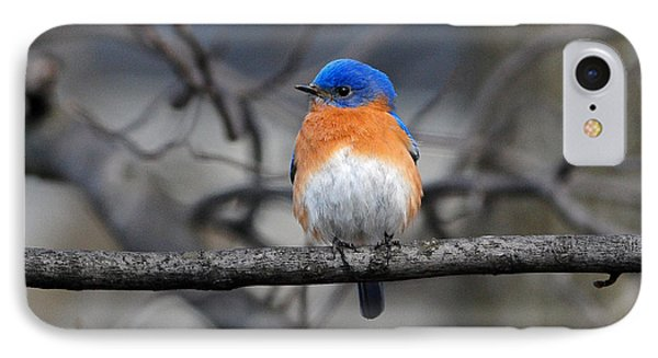 IPhone Case featuring the photograph Waiting For Spring by Olivia Hardwicke