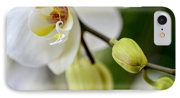 Waiting To Bloom IPhone Case by Julie Palencia