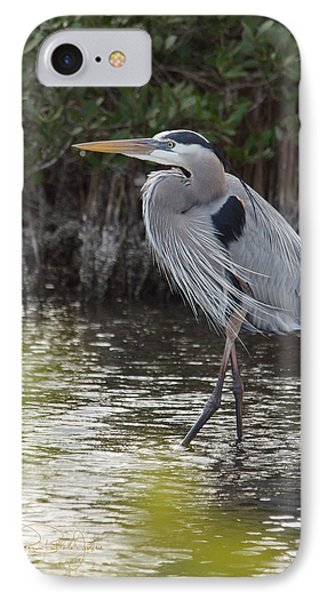 Walking Tall Great Blue Heron IPhone Case by Roxanne Brillante-Justice