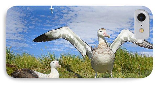 Wandering Albatross Courting  IPhone Case by Yva Momatiuk John Eastcott