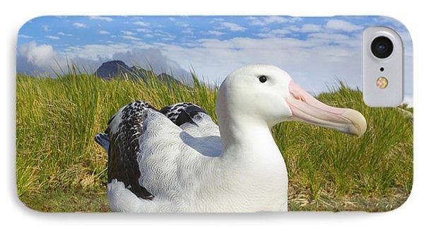 Wandering Albatross Incubating S Georgia IPhone Case by