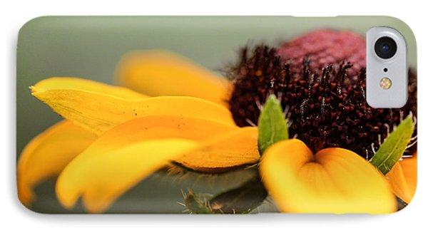 Warm Rudbeckia IPhone Case by Cathy Donohoue