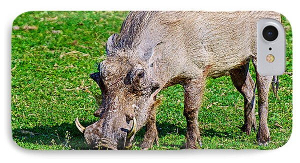 Warthog In Addo Elephant Park Near Port Elizabeth-south Africa  IPhone Case