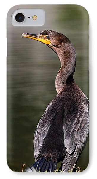 Wary Cormorant IPhone Case by Mike Farslow