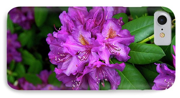 Washington Coastal Rhododendron IPhone Case by Ed  Riche