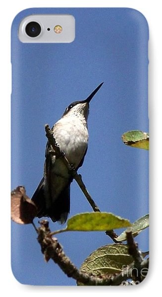 Watchful Female Hummingbird  Phone Case by Eunice Miller