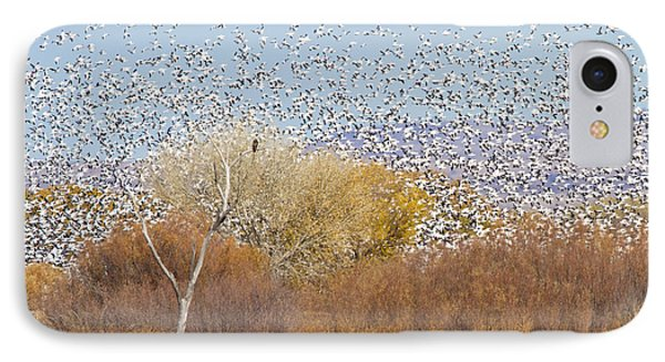 IPhone Case featuring the photograph Watching Over The Flock by Bryan Keil