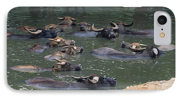 Water Buffalo IPhone Case by Chris Flees