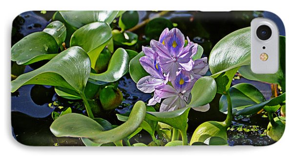 IPhone Case featuring the photograph Water Hyacinth by Linda Brown