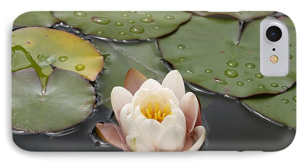 IPhone Case featuring the photograph Water Lilly by Haleh Mahbod