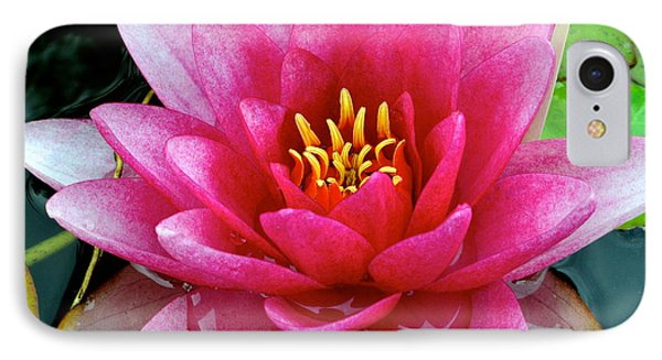 Water Lilly Phone Case by Frozen in Time Fine Art Photography