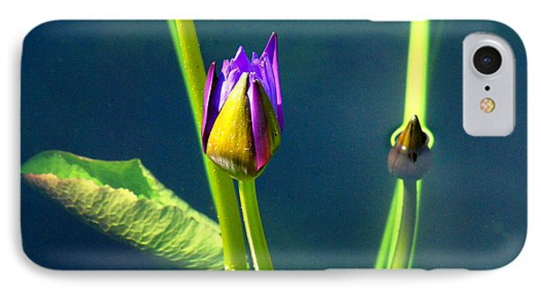 Water Lily 005 IPhone Case