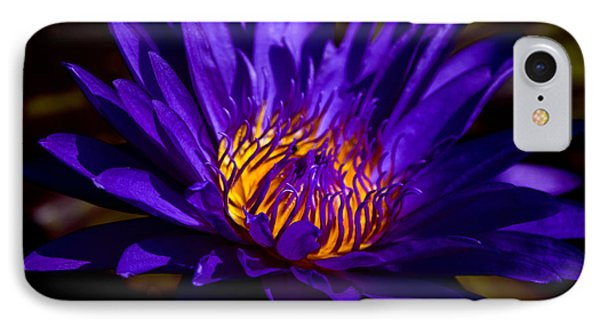 Water Lily 7 IPhone Case by Julie Palencia