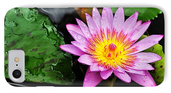 Water Lily IPhone Case by Denise Bird