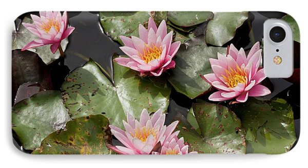 Water Lily (nymphaea 'pink Sensation') IPhone Case