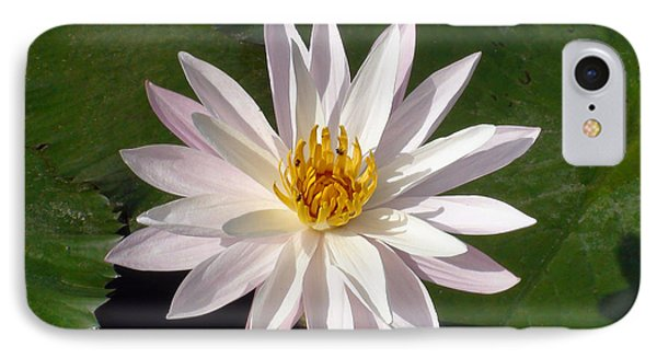 Water Lily IPhone Case by Sergey Lukashin