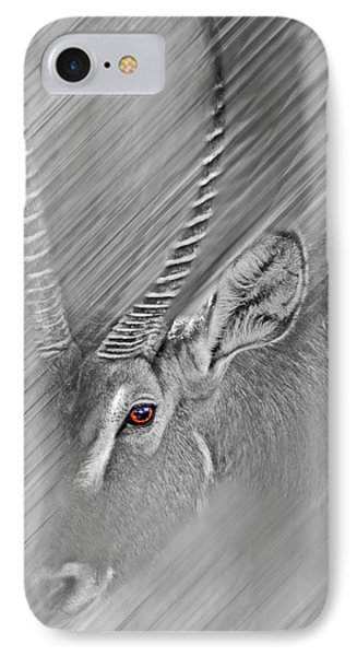 Waterbuck IPhone Case