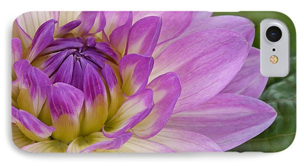 Waterlily Dahlia IPhone Case
