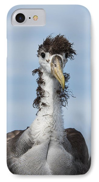 Waved Albatross Molting Juvenile IPhone 7 Case by Pete Oxford