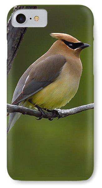 Cedar Waxing iPhone 7 Case - Wax On by Tony Beck