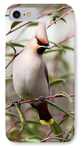 Waxwing Phone Case by Grant Glendinning