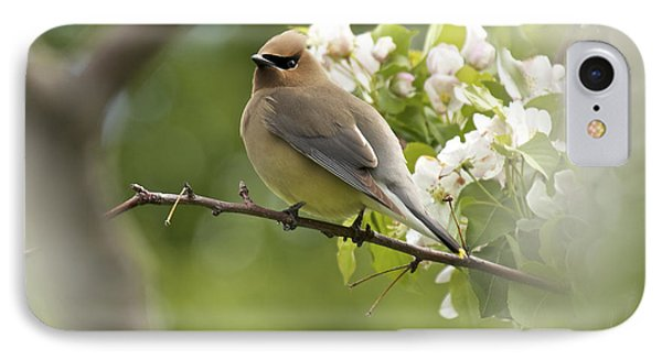 Waxwing In A Dream Phone Case by Penny Meyers