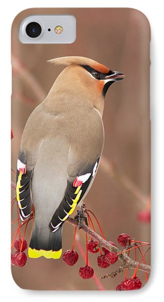 Waxwing In Winter IPhone Case by Mircea Costina Photography