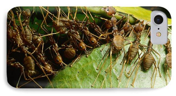 Weaver Ant Group Binding Leaves IPhone Case by Mark Moffett