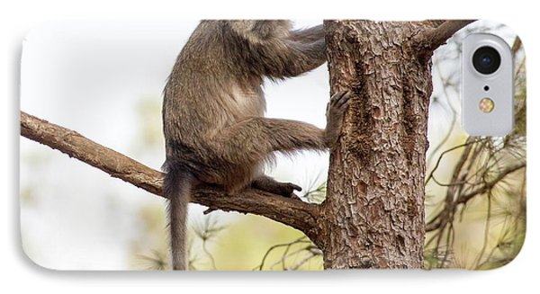 Weeper Capuchin IPhone Case by Photostock-israel