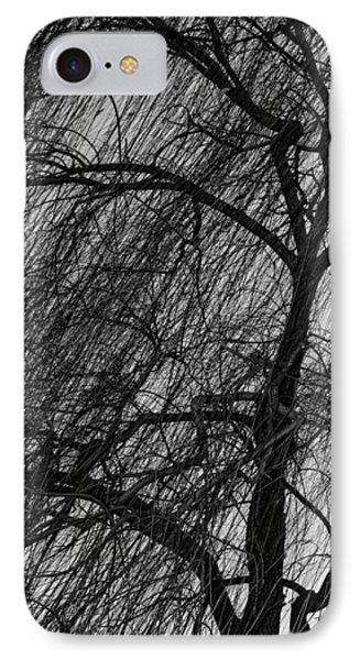 Weeping Willow IPhone Case by Robert Hebert