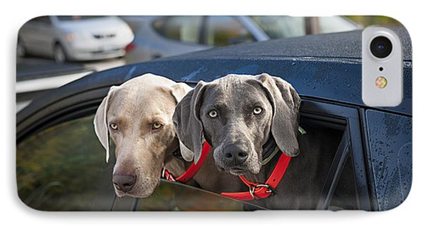 Weimaraner Dogs In Car IPhone Case by Elena Elisseeva