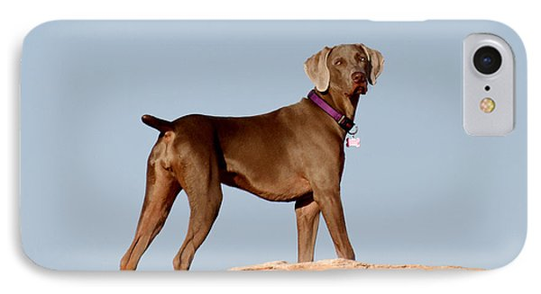 Weimaraner IIi - Lake Powell IPhone Case by Julie Niemela