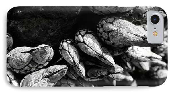 IPhone Case featuring the photograph West Coast Delicacy by Cheryl Hoyle