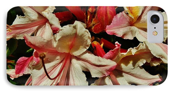 IPhone Case featuring the photograph Western Azalea by VLee Watson