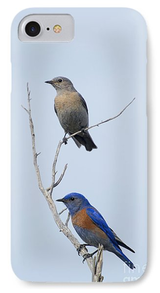 Western Bluebird Pair IPhone 7 Case by Mike  Dawson