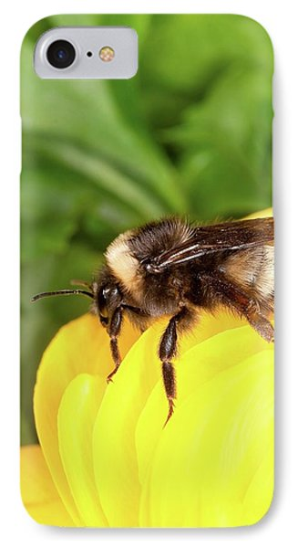 Western Bumble Bee IPhone Case by Stephen Ausmus/us Department Of Agriculture