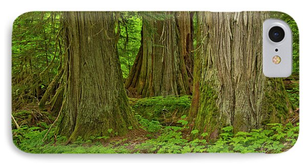Western Hemlock, Cedar, Grove IPhone Case by Michel Hersen