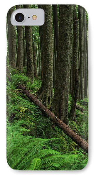 Western Hemlock Trees Grow In Oswald IPhone Case by Robert L. Potts