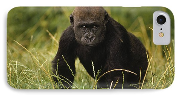 Western Lowland Gorilla Juvenile IPhone 7 Case by Gerry Ellis