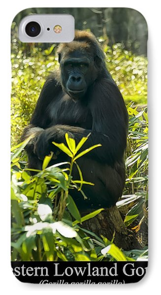 Western Lowland Gorilla Sitting On A Tree Stump IPhone Case by Chris Flees