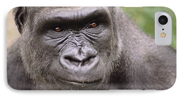 Western Lowland Gorilla Young Male IPhone 7 Case by Gerry Ellis